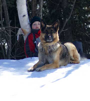 Chiot berger allemand a vendre Laval, Montreal a quebec